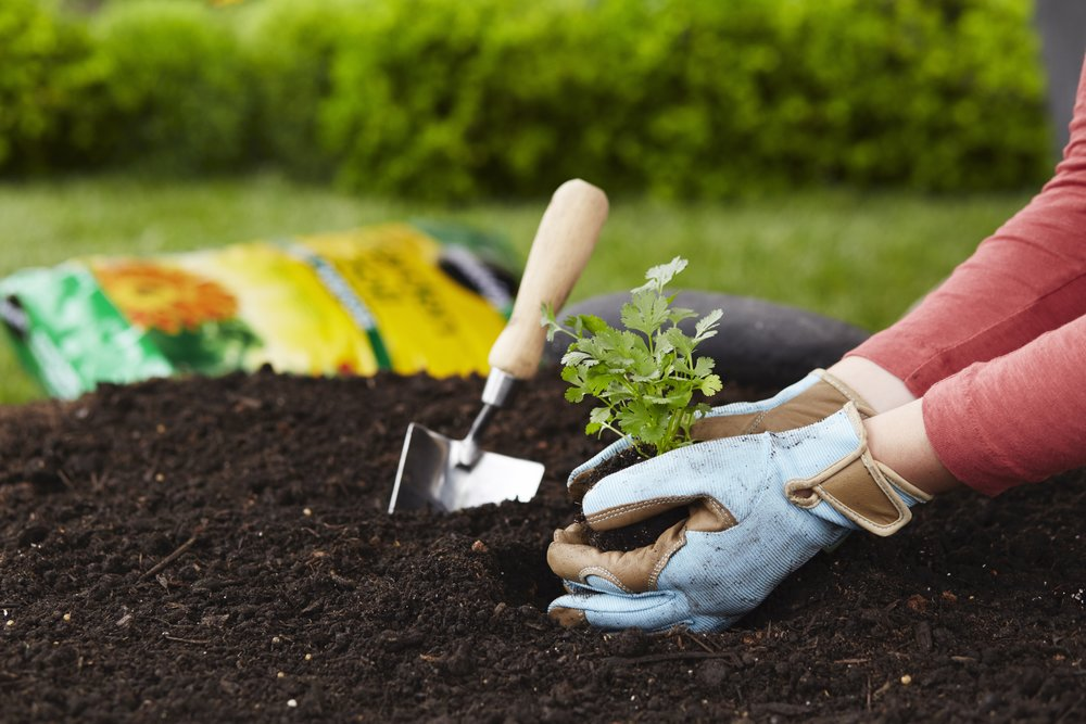 Adaptive Gardening After a Stroke